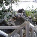 Petit détail du jardin