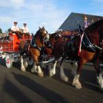 The Clydesdales at the Big E