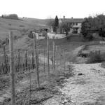Foto de Azienda Agraria Le Crete Agriturismo