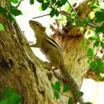 écureuil emblématique