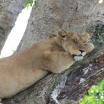Ellington Safaris - Day Tours