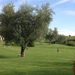 Agriturismo Il Casale degli Olivi Foto
