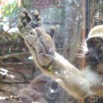 Photo de Zoo da Maia