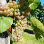 Avondale Sky Winery Photo