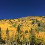 Aspen trees at Monarch Pass