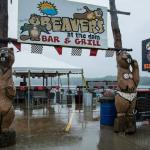 Foto de Beavers at the Dam
