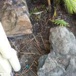 Club Croc Hotel Airlie Beach Foto