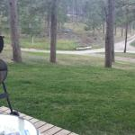 Grilling from porch of cabin #4