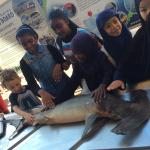 Natal Shark Board Foto