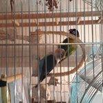 Очаровательные попугаи на первом этаже