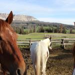 Horses at Brooks Lake Lodge