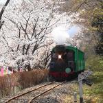 Yanaga Kibo no Mori Park