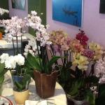 Joli cadre fleuri