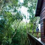 """""""Tree Frog"""" Forest Cabin"""