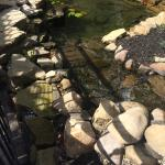 Pond on Patio