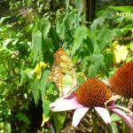 Foto de Chattahoochee Nature Center