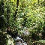 Foto de La Amistad National Park