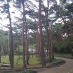 Anmyeondo Island Recreational Forest