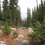 Photo de Roosevelt National Forest