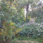 Wildflowers in the back garden
