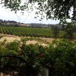 Karmere Vineyard and Winery Foto