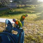 Lorikeets keen to join us for breakfast