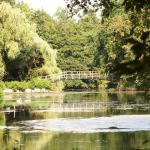 Veel waterpartijen in het park