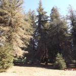 The redwood grove