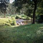 Stream near the Cottage