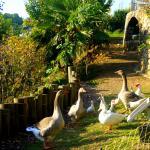 en contre-bas de la terrasse et du restaurant canards, oies et moutons