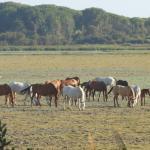 Wild horses in El Rocio