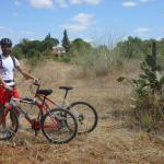 Bicycle tour near Aznalcazar village