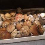 funghi porcini in bella vista