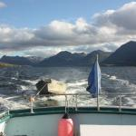 Sailing the Bays