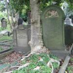 Tree grows through old grave