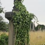 Ivy Covered Gravestone
