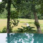 The view over our pool of the rice harvesting