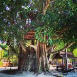 Charm Beach Treehouse