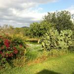 Agroturismo Sa Vinya D'en Palerm
