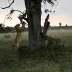 Foto de Offbeat Mara Camp