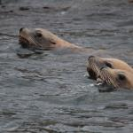 Outer Island Expeditions Foto