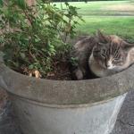 Kitty Kat on the Property