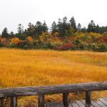 紅葉の睡蓮沼