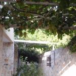 Grape vine outside entrance to Room 708