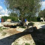 Ảnh về Agriturismo Lu Campu