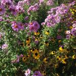 beautiful flowers around the B&B