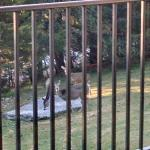 Deer from the patio of Country Blue