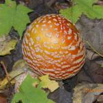 Bright mushroom