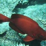 Tropical underwater-life