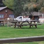 Vista Court Cabins & Lodge Foto